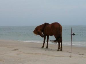 South Ocean Beach, Maryland