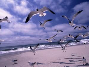 Ocracoke Beach,Ocracoke Island, North Carolina