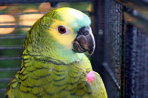 Photo by Pet Info Club