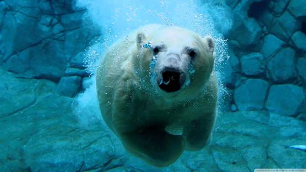 15 most dangerous and deadliest animals of the world inspirich