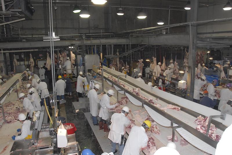Slaughterhouse Workers