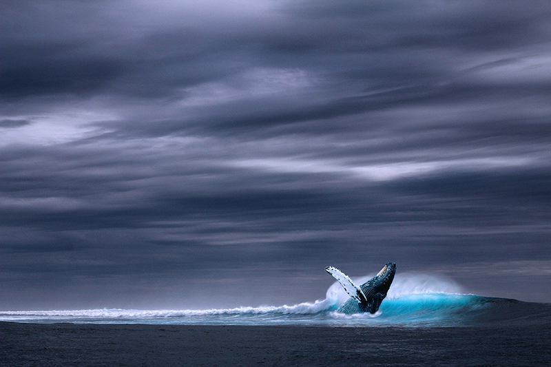 Watching Whales Dancing