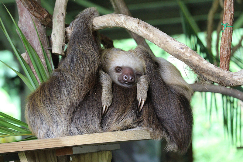 Communicate with the Sloth