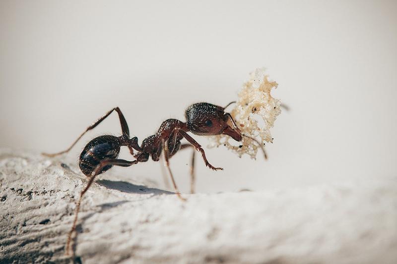 No Ants in Antarctica