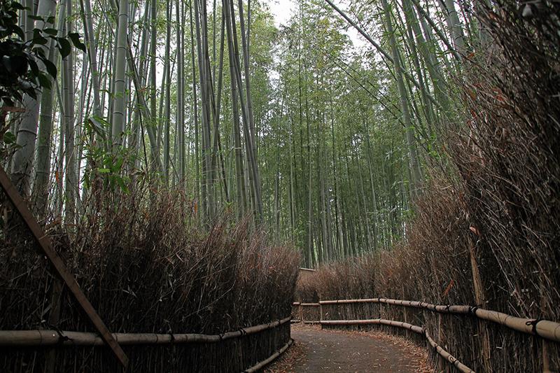 The Bamboo Groves of Arashiyama